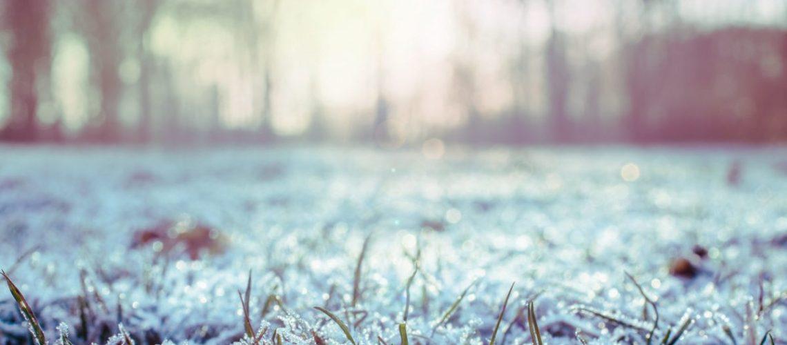 A close up of frosty grass.