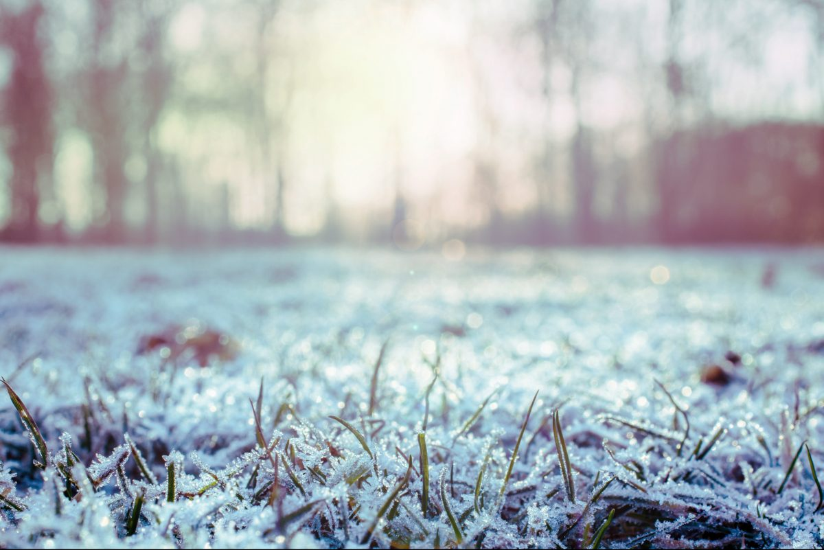 A close up of frosty grass.