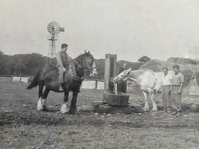 Black & white photo. Two shire horses, a black one and a grey one, standing around a well in a field, on a farm, with four people. The black one has one of the people sitting on it and the grey is drinking from the well.
