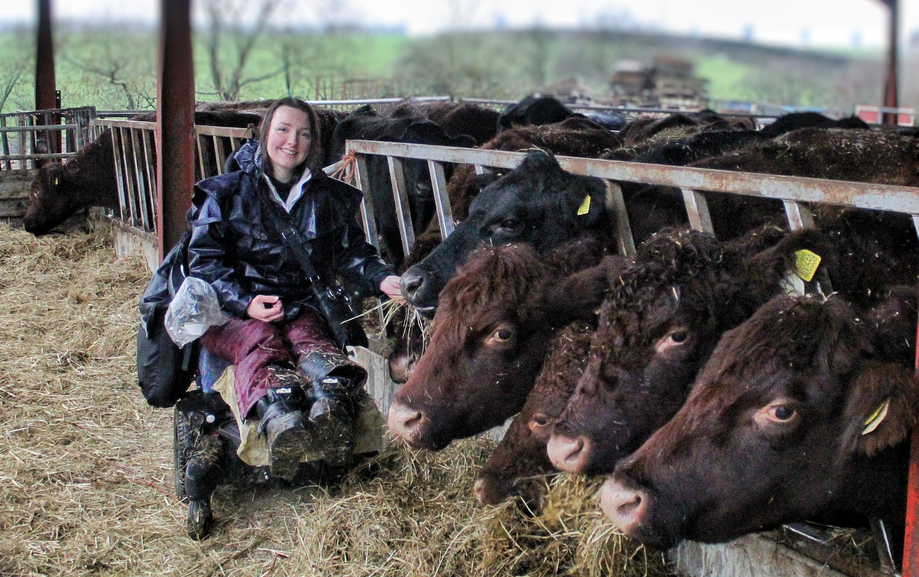 Holly, a white woman with brown, shoulder length hair, sitting in her powered wheelchair with the legs elevated next to a cattle shed with cows eating through the feed barrier